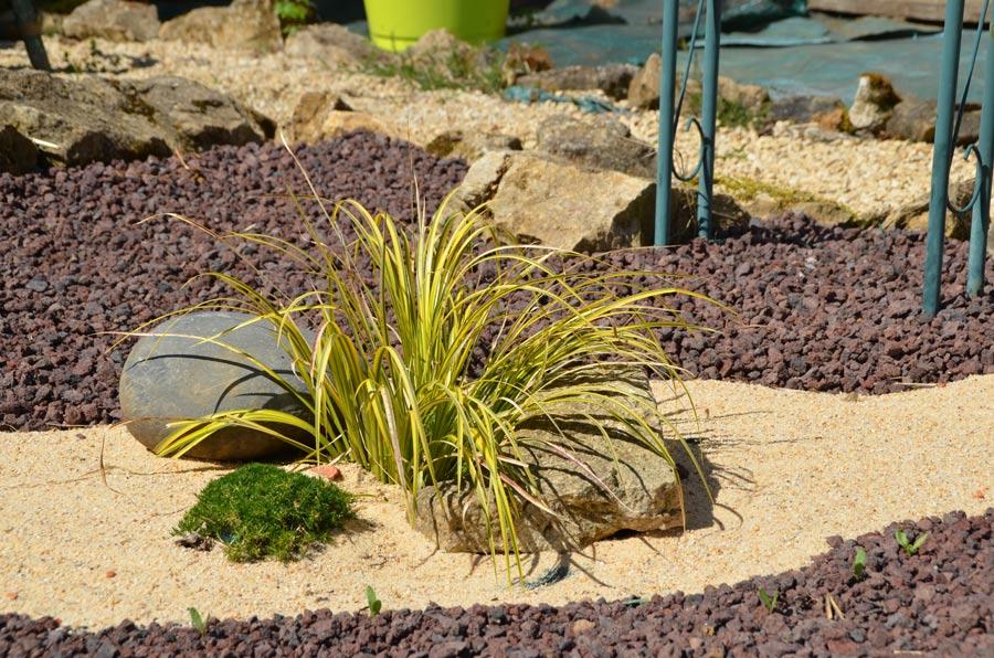 Sagine et carex dans le chemin de sable