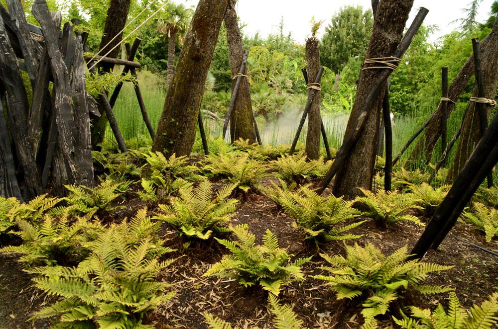 L'ère du Jurassic à Terra Botanica