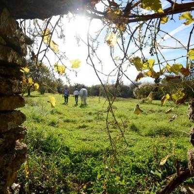 Cabane de vigne vue vers l'exterieur
