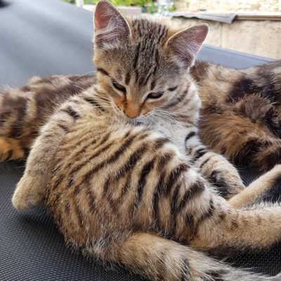 Natzuko, petite minette tigrée cherchant les câlins des vacanciers